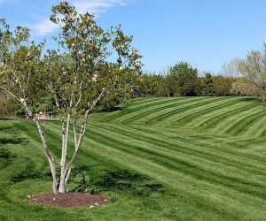 An area of freshly mowed grass