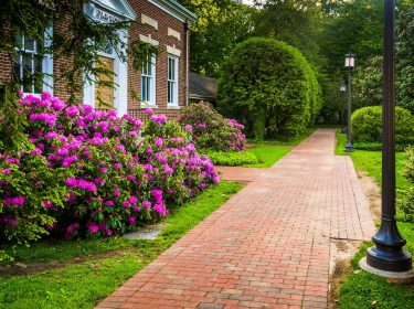A brick walkway with colorful shrubs on either side