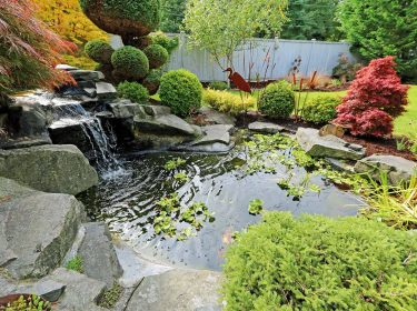 A goldfish pond with waterfall and colorful flowers and shrubs